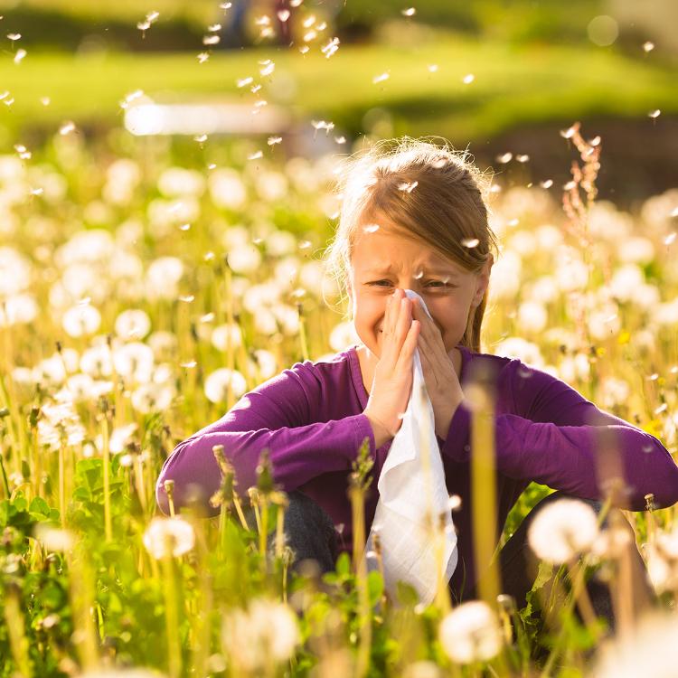Ribes, perilla, camomilla: rimedi naturali contro allergie primav...